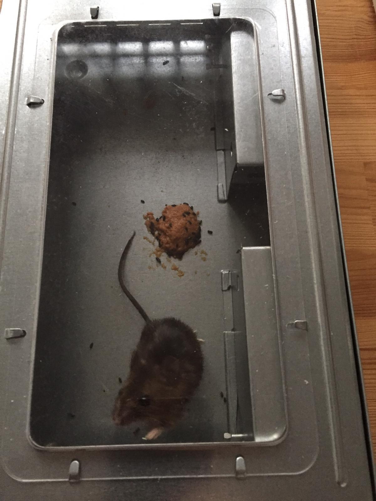 diervriendelijke muizenval kopen