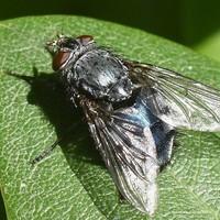 Vliegen bestrijden buiten