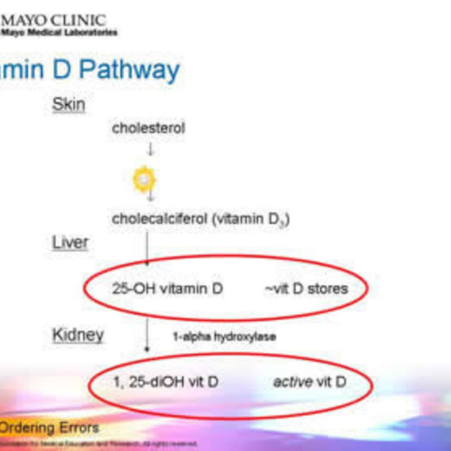 Actief Vitamine D