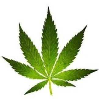 THC uit urine