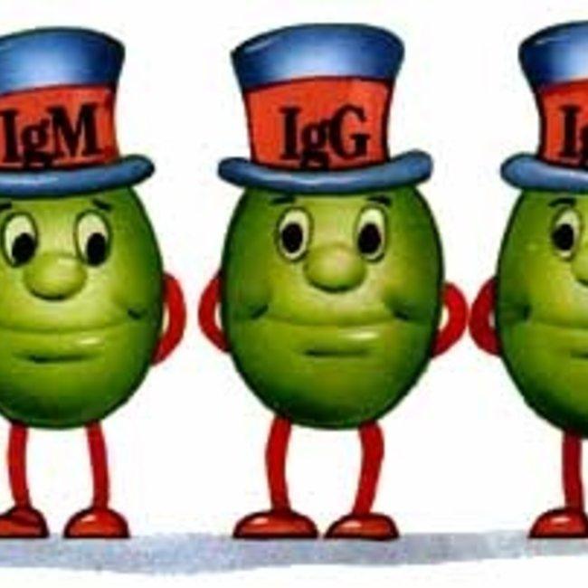 immunoglobuline IgA, IgG en IgM