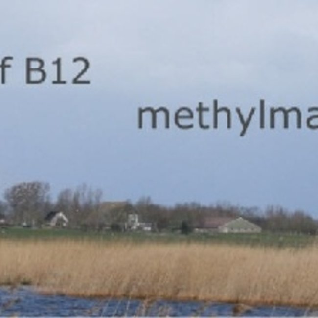 MMA vitamine B12 Methylmalonzuur in Bloed