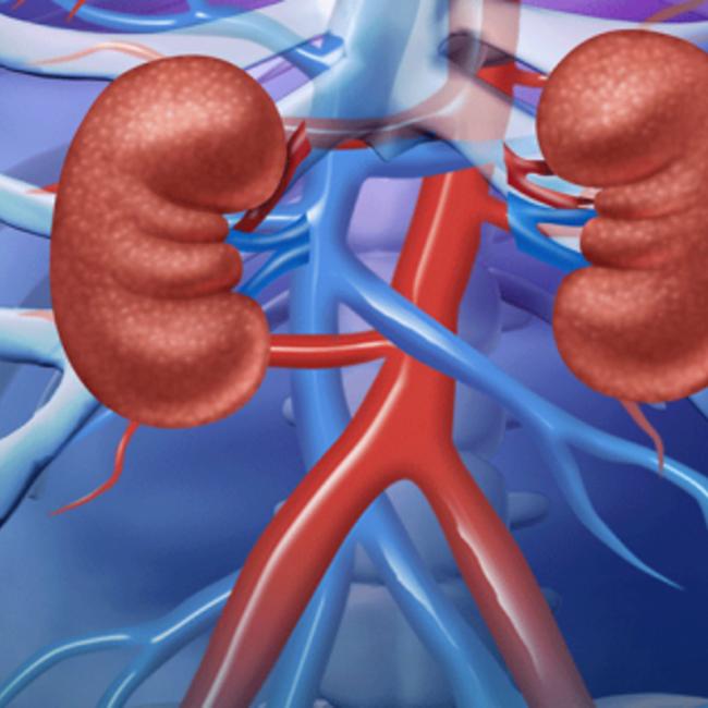 Onderzoek Nieren