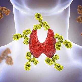 TSH, FT4 , FT3, anti-TPO , vitamine D, B12 en ferritine