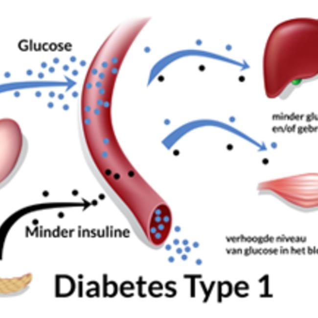 antistoffen tegen insuline