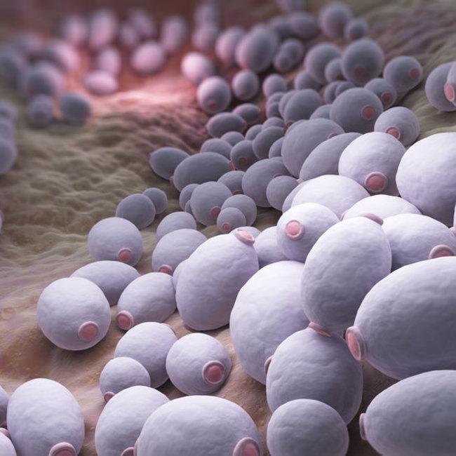 Candida Albicans IgA, IgG en antigeen