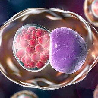 Chlamydia trachomatis-IgG  Antistoffen