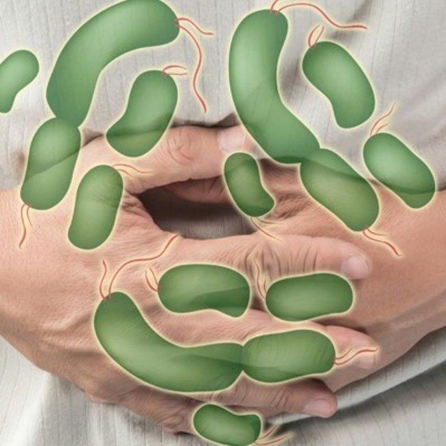 Salmonella Faces
