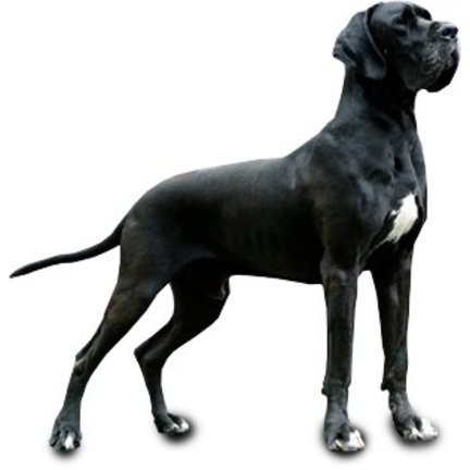 Hondenvoer