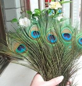 Pauwenveren met oog 100 stuks - 25 tot 30 cm