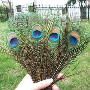Janshop Pauwenveren met oog 100 stuks - 25 tot 30 cm