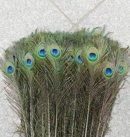 Janshop Pauwenveren met oog 50 stuks - 70 tot 80 cm