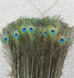 Pauwenveren met oog 100 stuks - 70 tot 80 cm