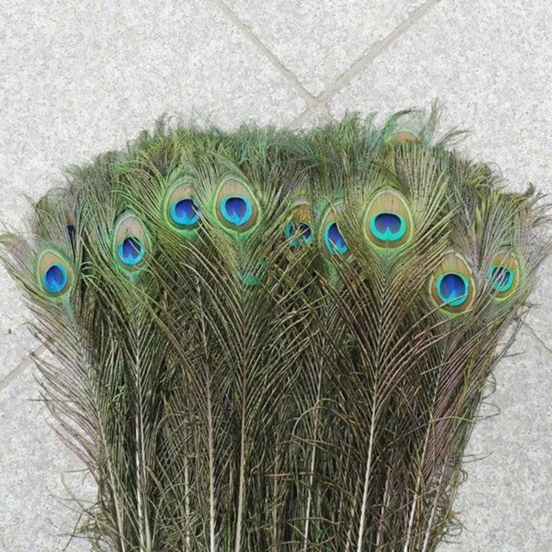 Janshop Pauwenveren met oog 100 stuks - 70 tot 80 cm