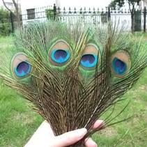 Pauwenveren met oog 20 stuks - 25 tot 30 cm