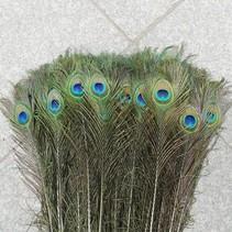 Pauwenveren met oog 20 stuks - 70 tot 80 cm