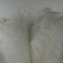 Struisvogelveren 10 stuks lengte ongeveer 65cm