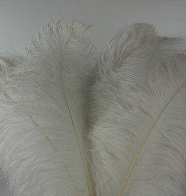 Janshop Struisvogelveren 10 stuks lengte ongeveer 65cm