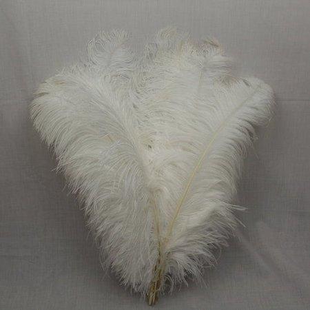 Struisvogelveren 20 stuks lengte ongeveer 65cm