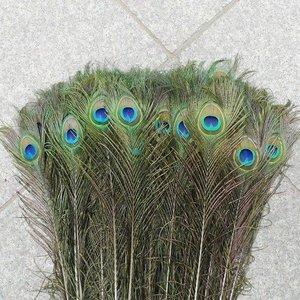 Janshop Pauwenveren met oog 10 stuks - 70 tot 80 cm