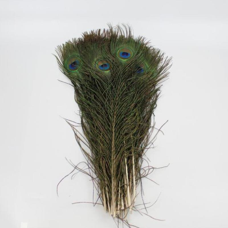 Janshop Pauwenveren met oog 10 stuks - 40 tot 45 cm