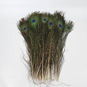 Pauwenveren met oog 50 stuks - 40 tot 45 cm