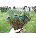 Pauwenveren met oog 10 stuks - 25 tot 30 cm