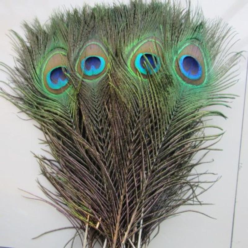 Janshop Pauwenveren met oog 10 stuks - 25 tot 30 cm