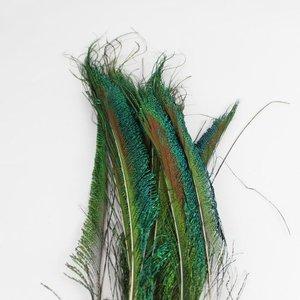 Janshop Zwaardveren pauw 100 stuks - 30 tot 35 cm