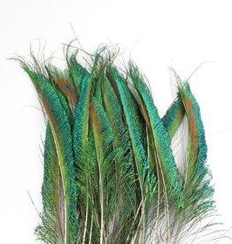 Zwaardveren pauw 20 stuks - 30 tot 35 cm