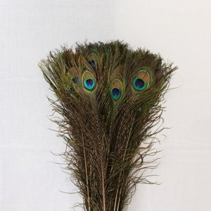 Janshop Pauwenveren met oog 10 stuks - 110 cm