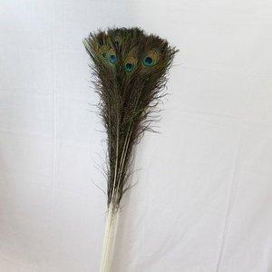 Pauwenveren met oog 10 stuks - 110 cm
