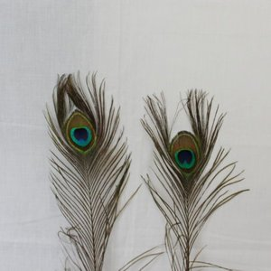 Janshop Pauwenveren met oog 20 stuks - 110 cm