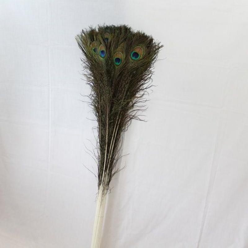 Pauwenveren met oog 50 stuks - 110 cm
