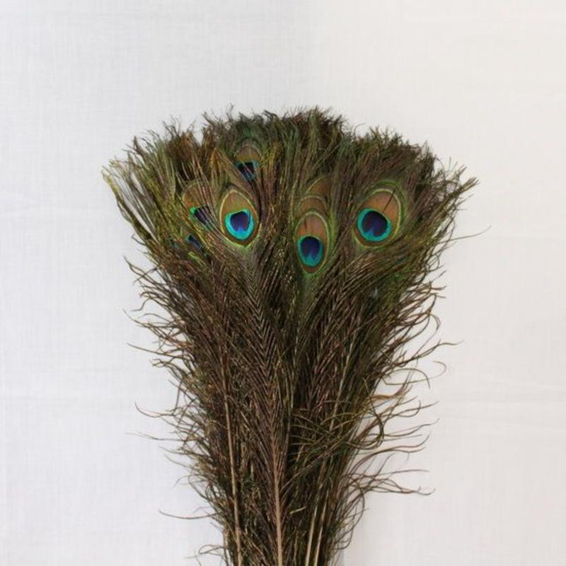 Janshop Pauwenveren met oog 100 stuks - 110 cm