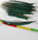 Zwaardveren pauw 10 stuks - 30 tot 35 cm