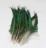 Zwaardveren pauw 100 stuks - 30 tot 35 cm
