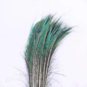 Janshop Zwaardveren pauw 10 stuks - 70 tot 80 cm