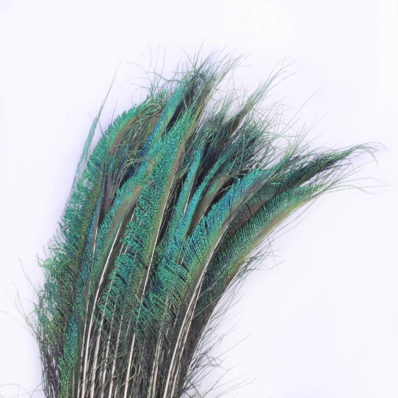 Zwaardveren pauw 20 stuks - 70 tot 80 cm