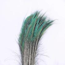 Zwaardveren pauw 100 stuks - 70 tot 80 cm