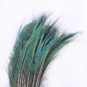 Janshop Zwaardveren pauw 100 stuks - 70 tot 80 cm