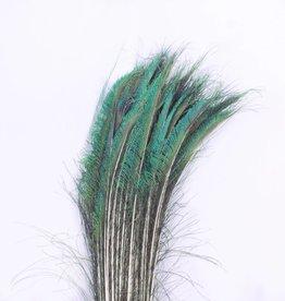 Zwaardveren pauw 50 stuks - 70 tot 80 cm