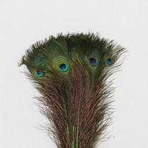 Pauwenveren 10 stuks - 70 tot 80 cm groen geverfd
