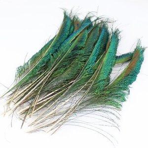 Zwaardveren pauw 20 stuks - 25 tot 30 cm