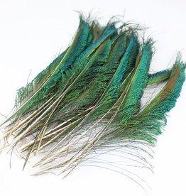 Zwaardveren pauw 10 stuks - 25 tot 30 cm