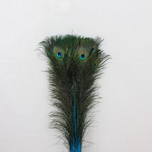 Pauwenveren 10 stuks - 70 tot 80 cm lichtblauw geverfd