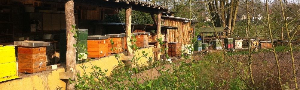 Bijen helpen? Plant voorjaarsbloeiers!