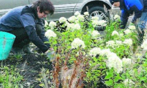 Eine Straße oder ein Garten voll Schmetterlinge und Bienen? Pflanzen Sie Blumenzwiebeln mit Ihren Nachbarn!