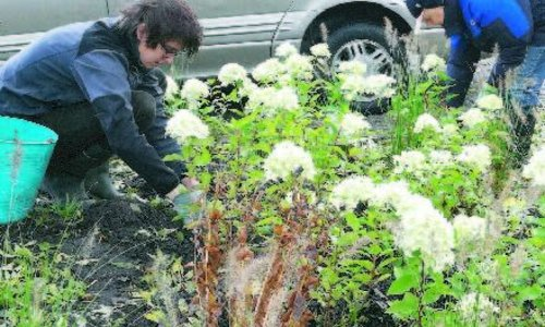 Street and gardens attracking butterflies and bees by planting together with neighbours