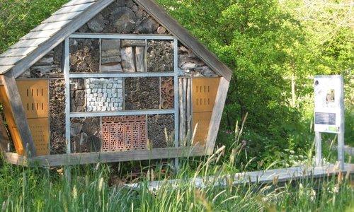 3 maanden lentebloeiende planten voor wilde bijen